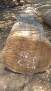 Pengelola.an gebyok kayu lok jati TPK